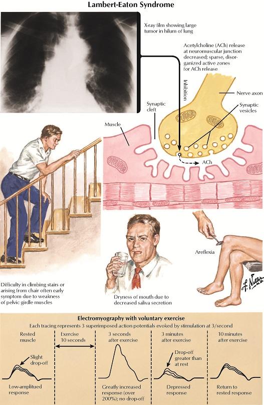 Неотложная урологическая помошь в практике военного врача.